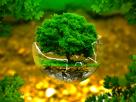 thực vật có vai trò gì đối với nguồn nước